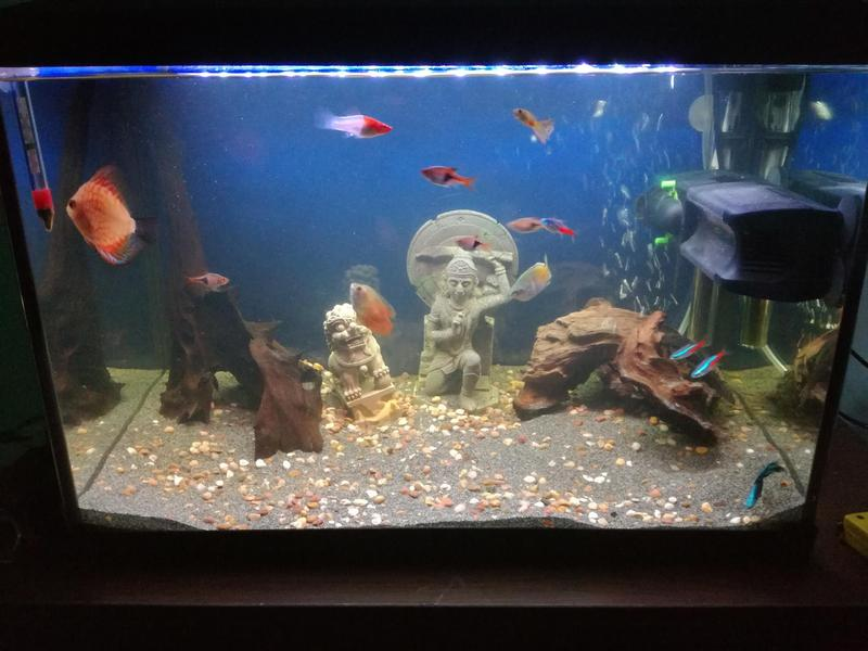 75 litre tropical fish tank set up in newport expired for Setting up a fish tank