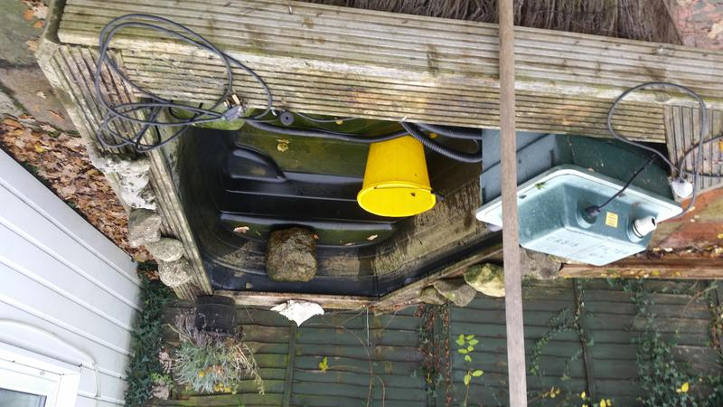 Fish pond for sale east cowes wightbay for Garden pond fish for sale