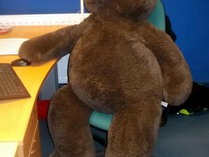 Large bear £20 in Cowes