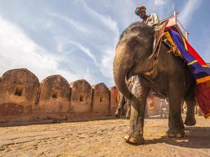 India - Tigers and Taj Mahal Tour 10 days from £1099 pp - Not Just Travel Isle of Wight in Shanklin